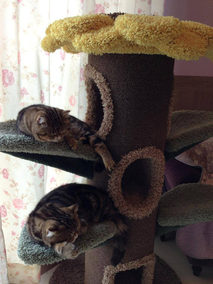 sunflower cat tree