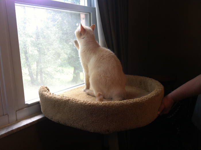 cat perches for sale interior design ideas. Black Bedroom Furniture Sets. Home Design Ideas