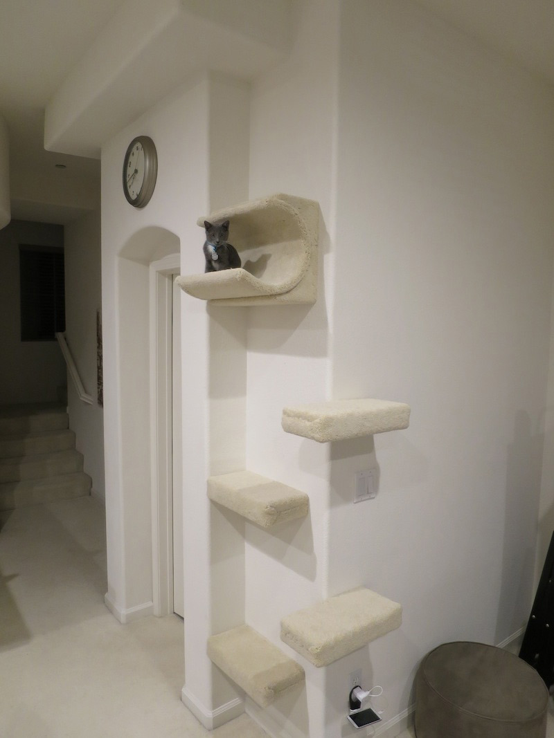 Cat wall shelf and cradle installed on a corner cat wall climbing system installed on a corner amipublicfo Image collections
