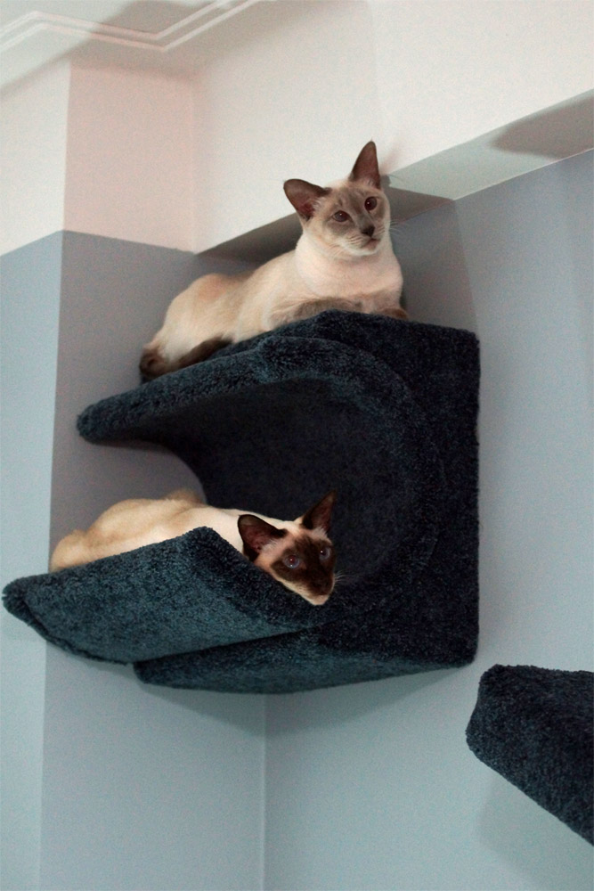 two beautiful siamese cats enjoy their cat wall system. Black Bedroom Furniture Sets. Home Design Ideas
