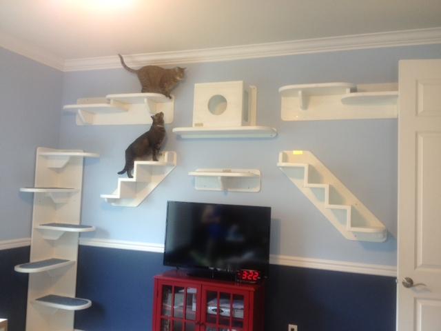 Diy Cat Wall Steps Clublilobal Com