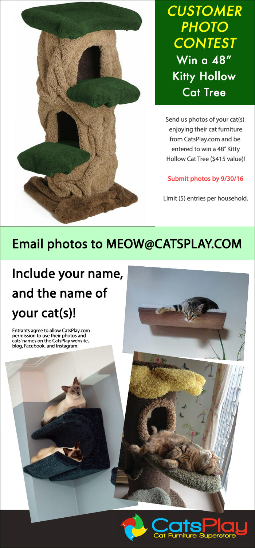 catsplay photo contest