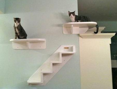 Mounted cat tree images - Wall mounted cat climber ...