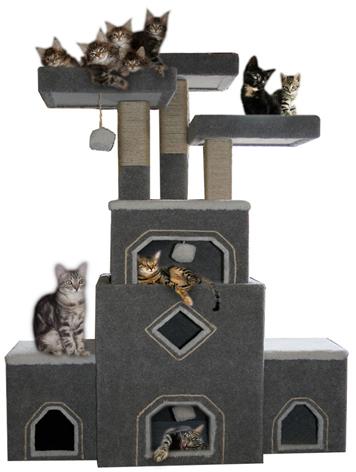Boardwalk Cat Gym