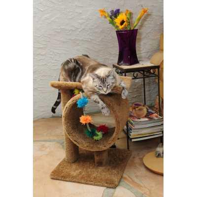 New Cat Tunnel Perch