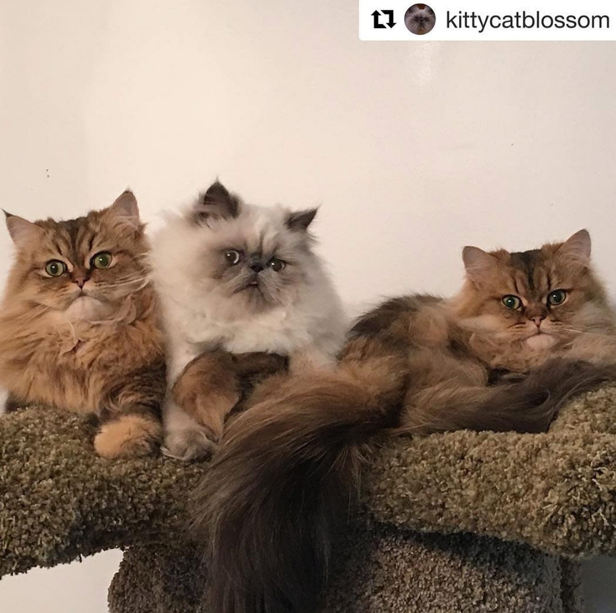 CatsPlay Cat Furniture Instagram
