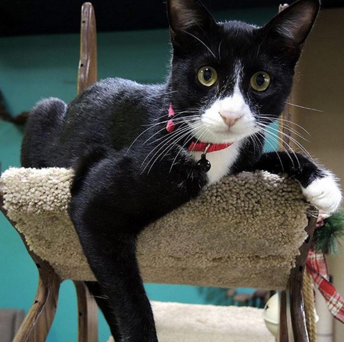 CatsPlay Cat Furniture Instagram