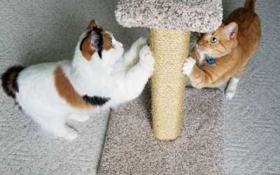 Customer Spotlight - Sisal Scratching Post