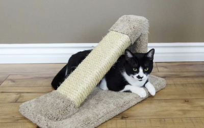 Solve your cat's scratching problems with a cat scratching post from CatsPlay Furniture