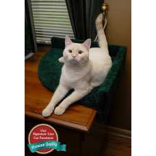 Cat Corner Desk Lounger