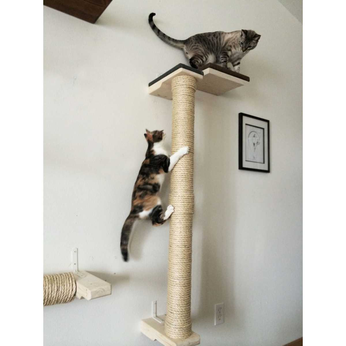 Vertical Cat Scratching Posts Uk