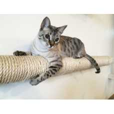 CatastrophiCreations  Wall-mounted Sisal Cat Pole - Horizontal Runway