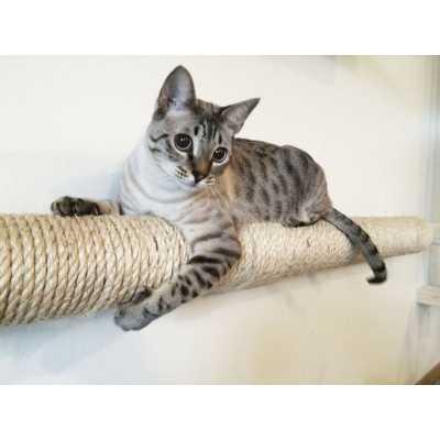 CatastrophiCreations  Wall-mounted Sisal Cat Pole - Horizontal Runway