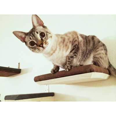 CatastrophiCreations Burlap Covered Cat Shelf