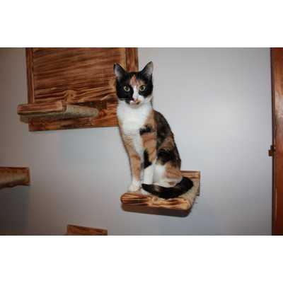 Flat Sisal Cat Wall Step