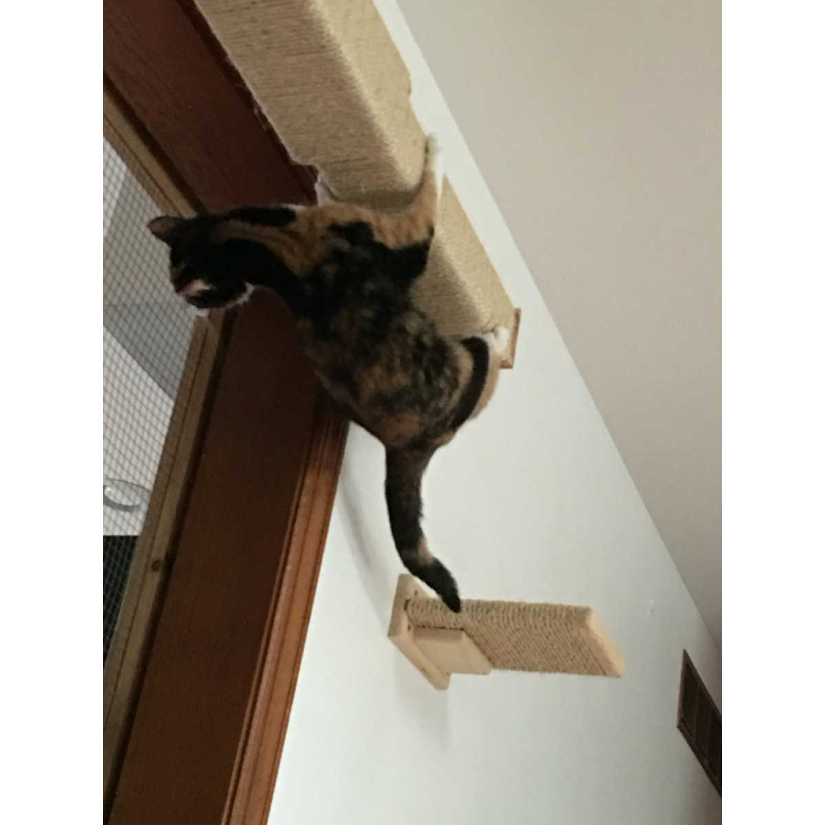 Modish Wall Mounted Cat Climbing Pole