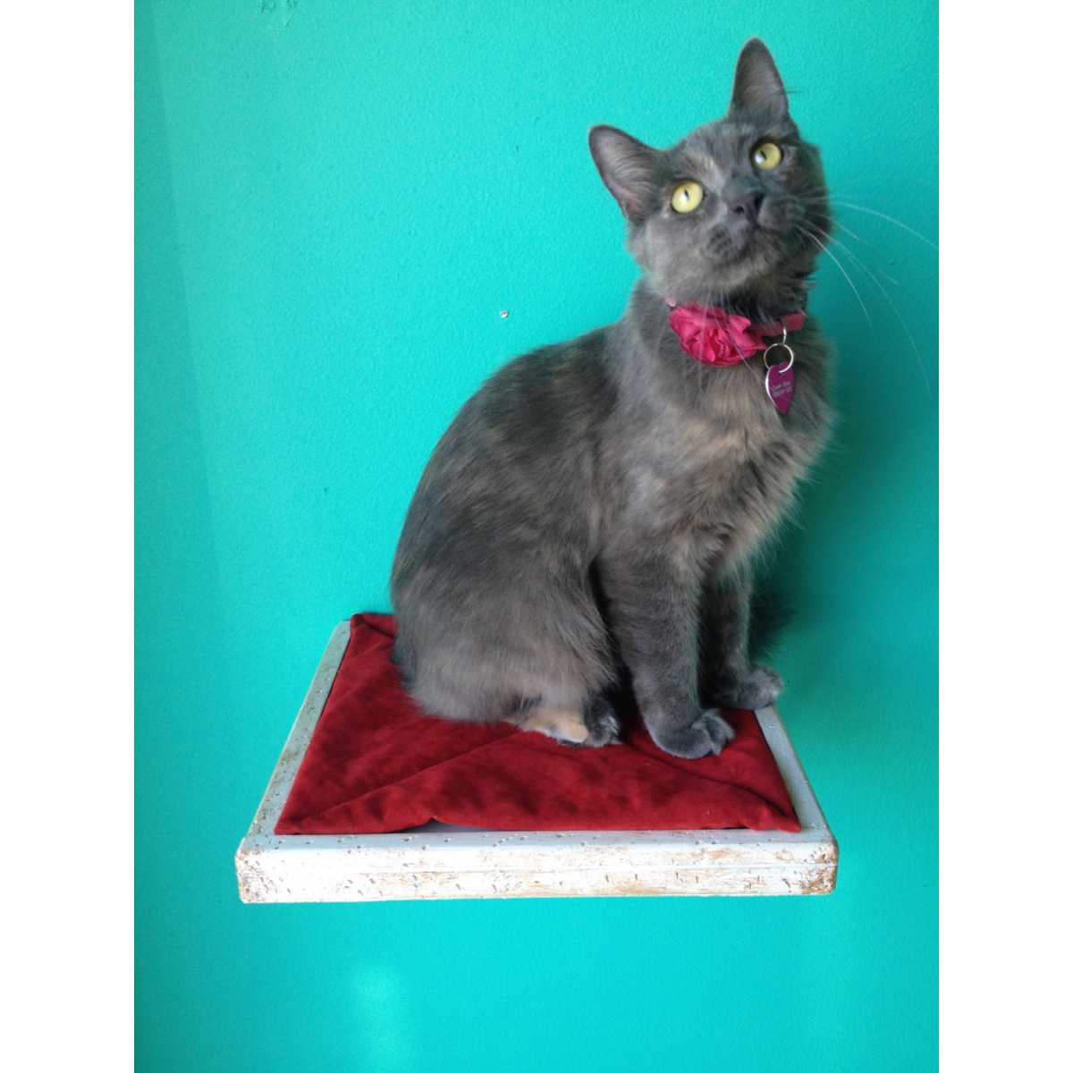 Artisan Made 2 Floating Cat Wall Shelves 1