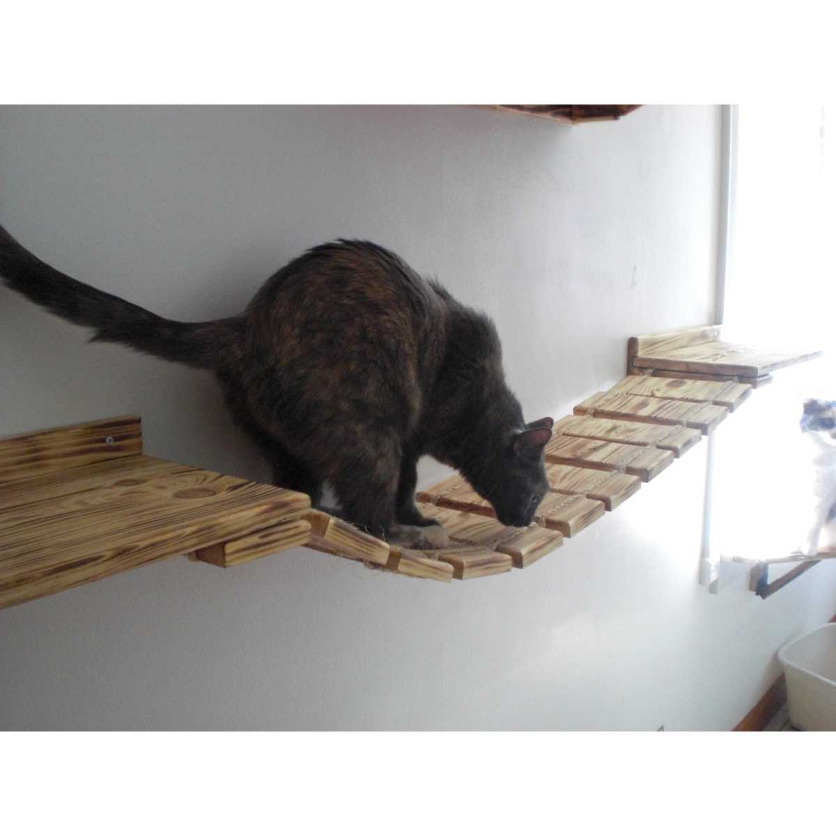 Cat Containment Systems Reviews