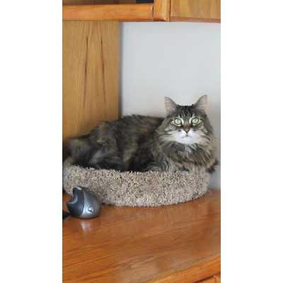 Carpeted Desk Topper Cat Bed