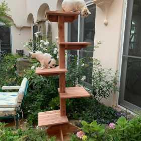SUMMER CAT SHOWCASE: Indoor-Outdoor Cedar Cat Trees, Gyms, Houses, Wall Climbers