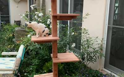 SUMMER CAT SHOWCASE: Indoor-Outdoor Cedar Cat Trees, Gyms, Houses, Wall Climbers