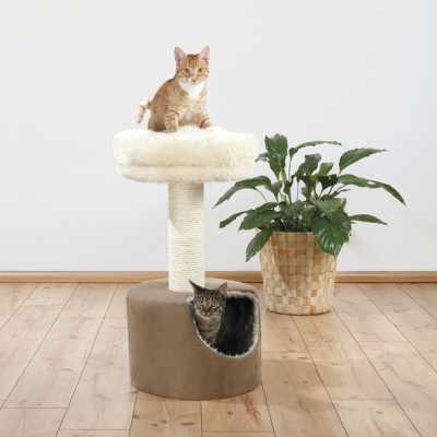 Doolittle Cat Condo