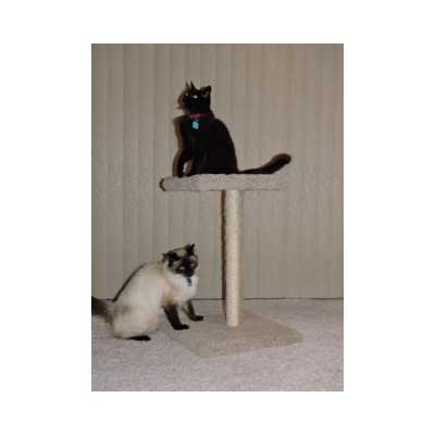 P&P Purrington Carpet Scratching Post