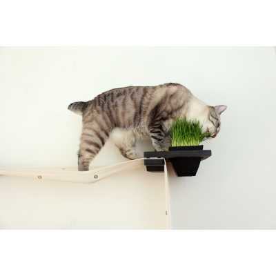 Planter - Wall Mounted for Cats