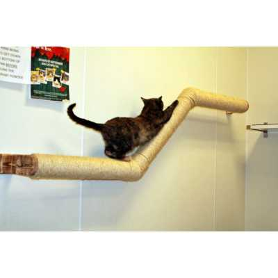 Abby's Ziggy Cat Wall Climber