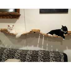 Cat Wall Walkway Variation (2 bridges, 3 platforms)