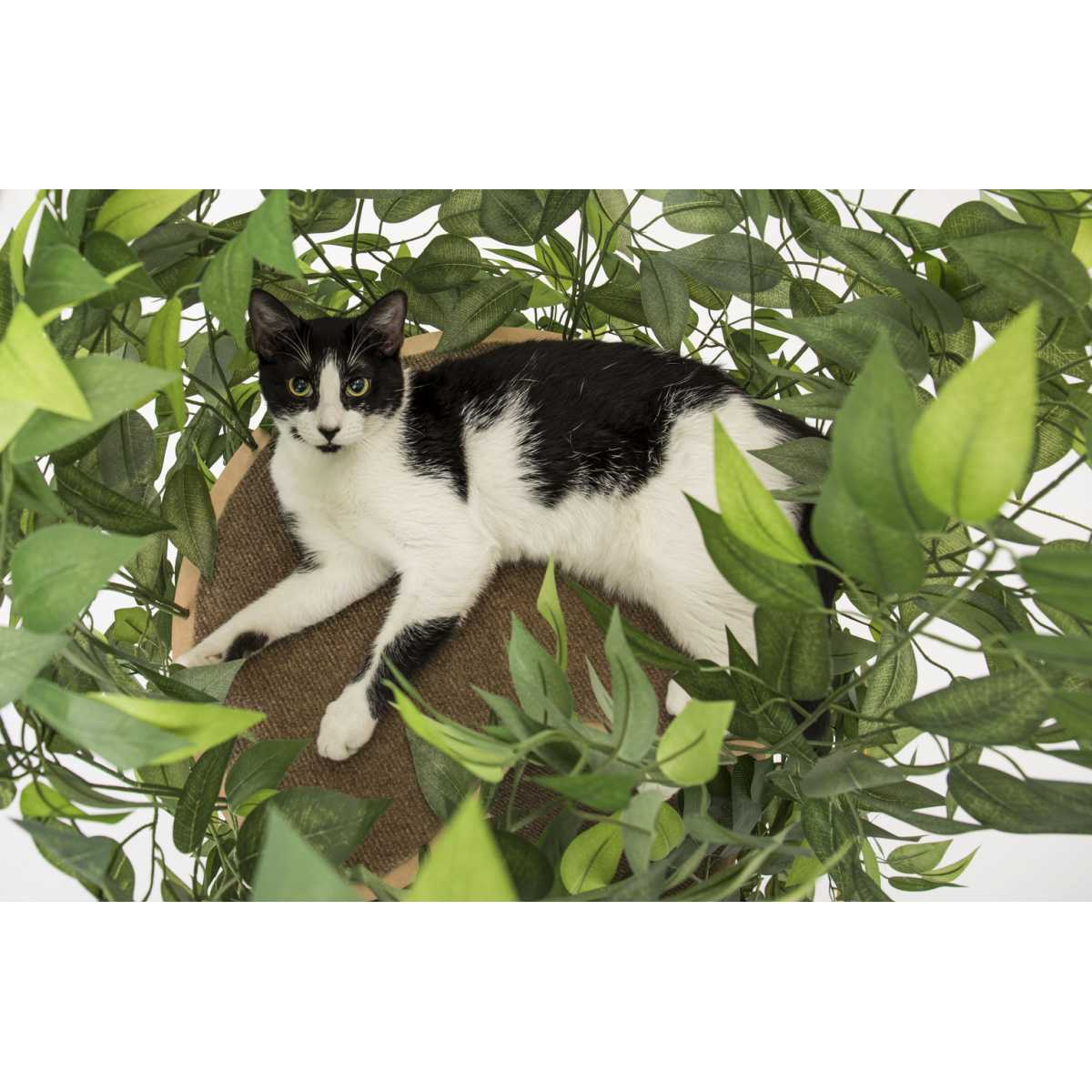 Luxury Cat Tree Large Round Base Catsplay Superstore