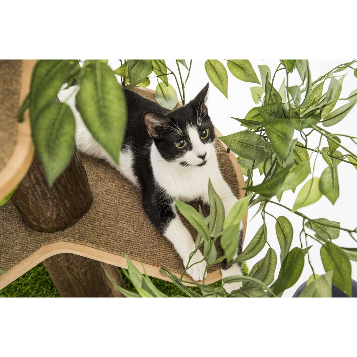 Luxury Cat Tree Large Square Base Catsplay Superstore
