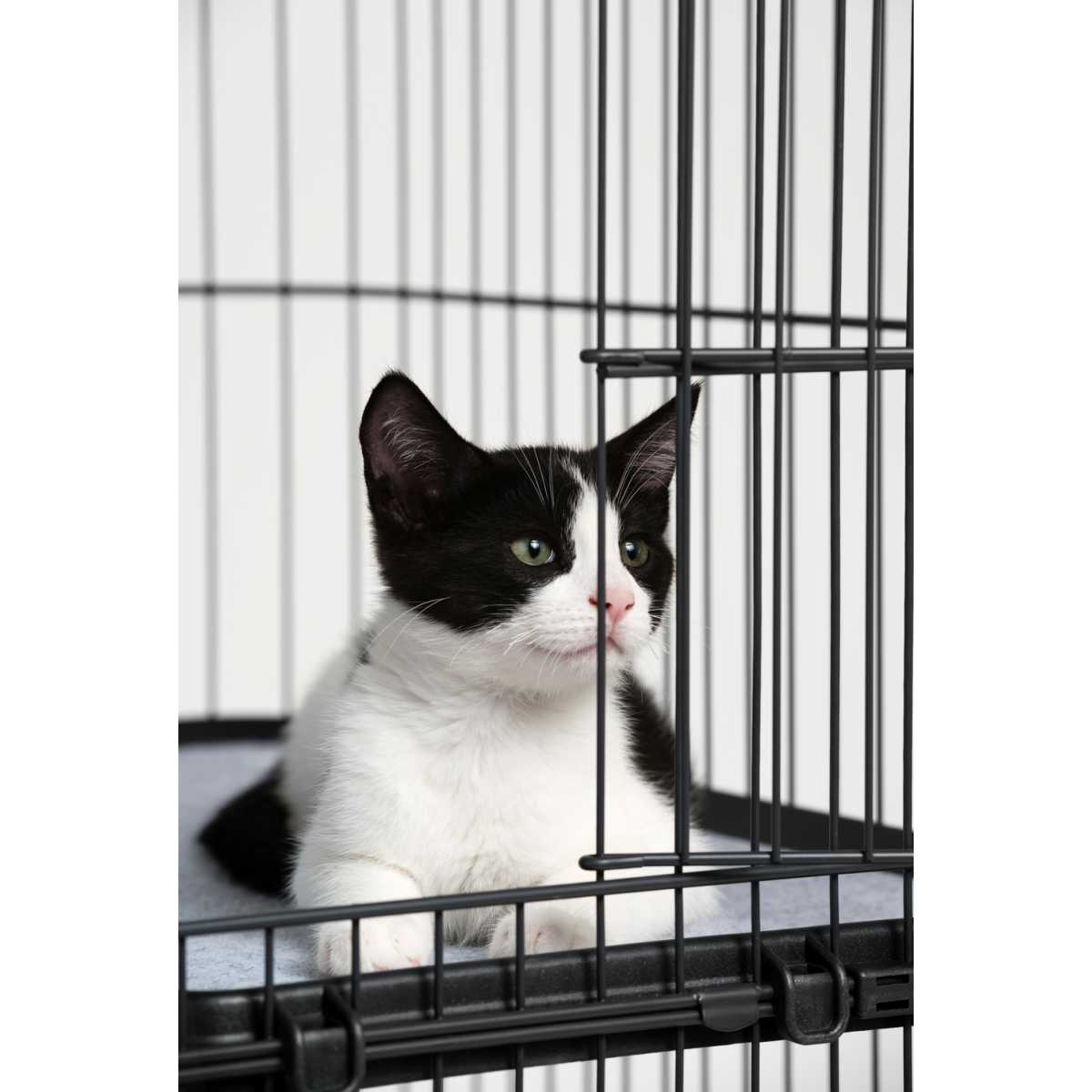 Premium Cat Home With 4 Levels 7500 Catsplay Superstore