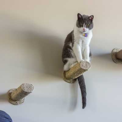 Sisal Step / Cat Scratching Post (wall mounted) Image