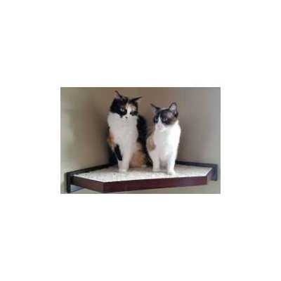 Cat Furniture Climbing Wall Shelves - FLASH SALE - ONE ONLY