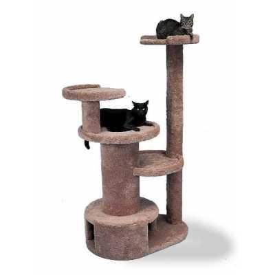 The Colonade Cat Gym