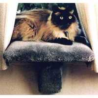 Small Padded Cat Window Perch