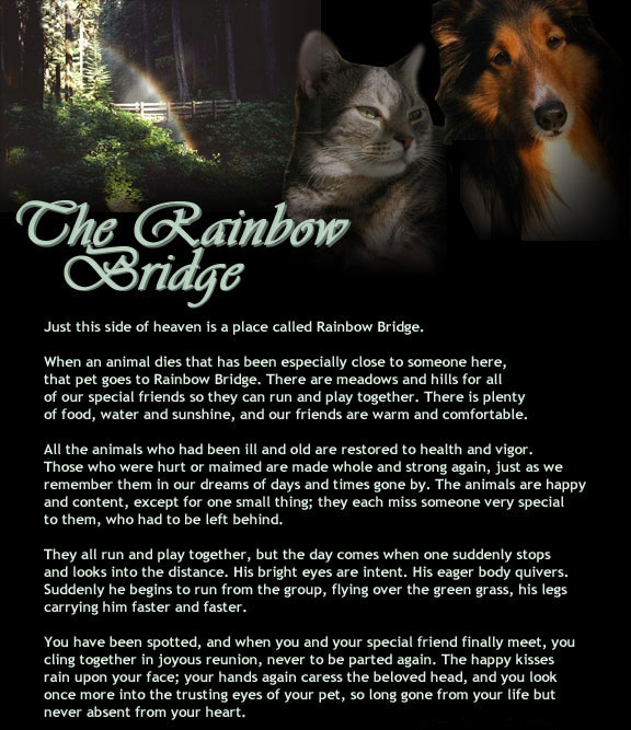 The Rainbow Bridge Poem Pet Memorial For Pet Loss Of A Pet Death